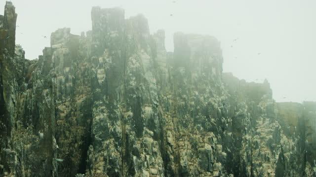 la pan misty auk and guillemot nesting cliffs with massed birds in flight - auk stock videos & royalty-free footage