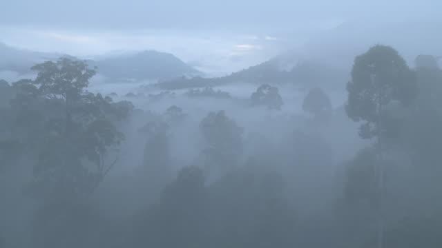 Misty cloud clears to reveal jungle, high angle, Maliau Basin, Sabah, Malaysia, Borneo