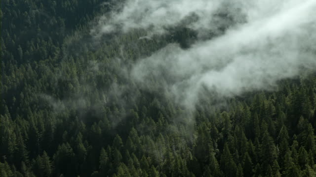 Misty clouds over redwood forest in Northern California.