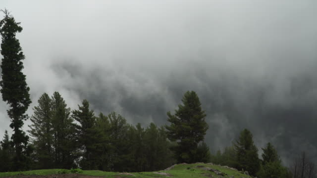 misty clouds over the green trees - coniferous stock videos & royalty-free footage