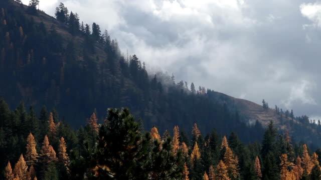 vídeos y material grabado en eventos de stock de misty clouds rising off golden tree covered mountainside. - pinaceae
