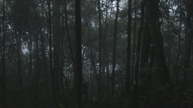 misty dark forest slider shot - malaysia stock videos & royalty-free footage