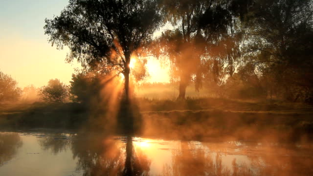 misty dawn on the river - 20 seconds or greater stock videos & royalty-free footage