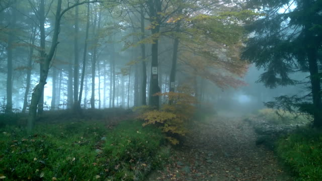 Misty fog forest.