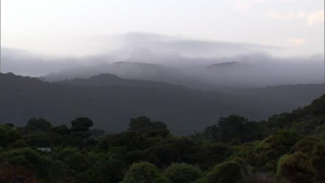 Misty forest at dawn, Codfish Island, New Zealand