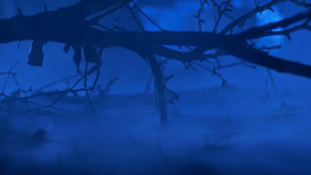 vídeos de stock, filmes e b-roll de hd: misty floresta ao luar - filme colagem