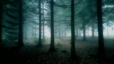 vidéos et rushes de forêt brumeuse. - forêt