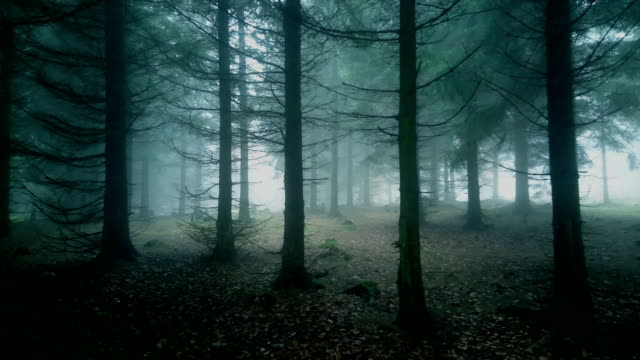misty forest. - spooky stock videos & royalty-free footage