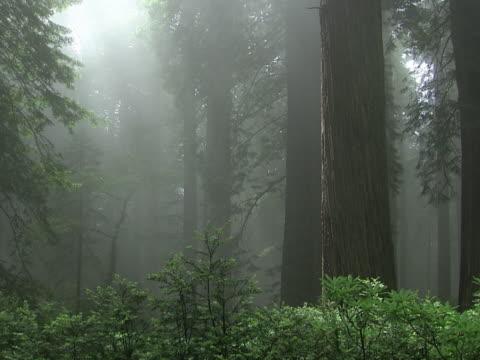 vidéos et rushes de misty glade - sparklondon