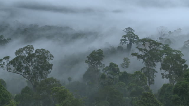 misty jungle, high angle, maliau basin, sabah, malaysia, borneo - rainforest stock videos & royalty-free footage