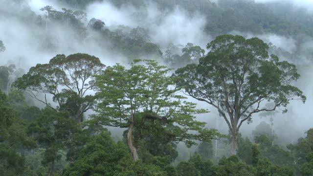 misty jungle, high angle, maliau basin, sabah, malaysia, borneo - malaysia stock videos & royalty-free footage