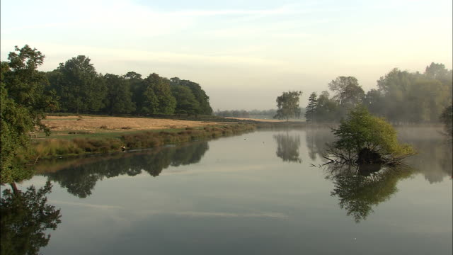 misty lake at dawn, richmond park, london, uk - richmond upon thames stock-videos und b-roll-filmmaterial