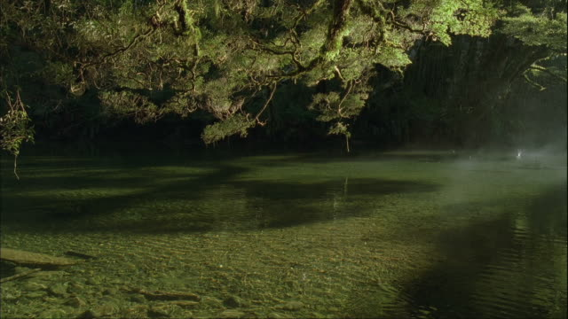 ms, tu, misty lake in temperate rainforest, fiordland national park, south island, new zealand - 謎点の映像素材/bロール