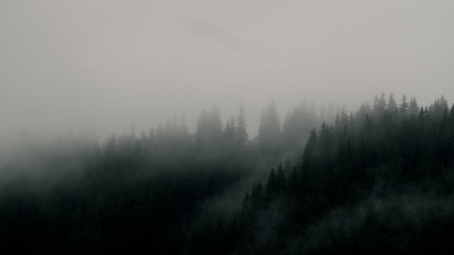 Misty mood, moving clouds over pine forest trees near a lake.