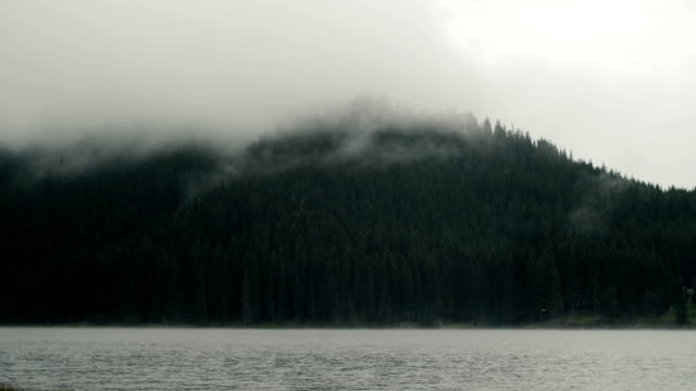 misty mood, moving clouds over pine forest trees near a lake. - greenland stock videos & royalty-free footage