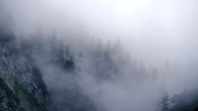 Misty Mountain Forest 01