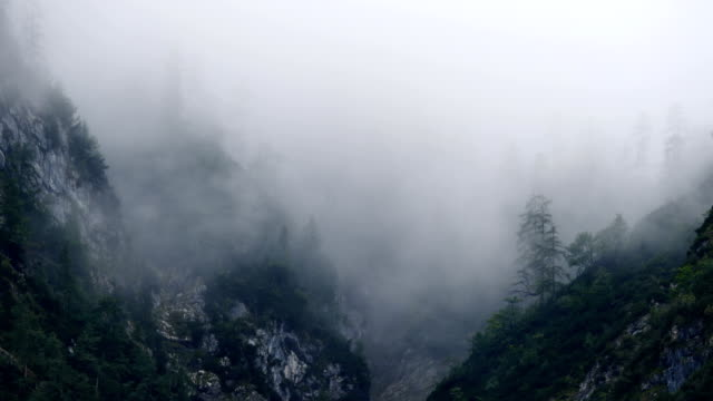 Misty Mountain Forest 02