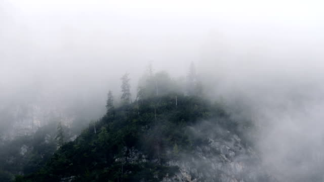 Misty Mountain Forest 03