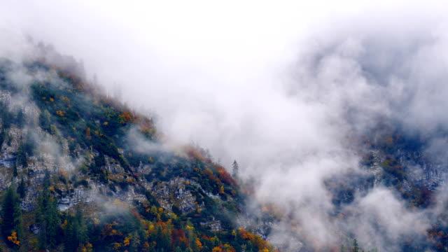 Misty Mountain Forest 04 pullback