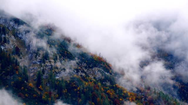 Misty Mountain Forest 04