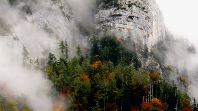Misty Mountain Forest 05a