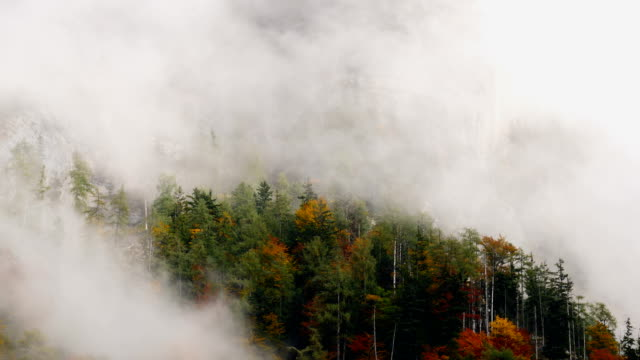 misty mountain forest 05b - 50 seconds or greater stock videos & royalty-free footage