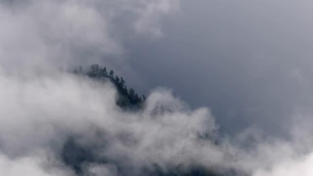Misty Mountain Forest 06 pullback