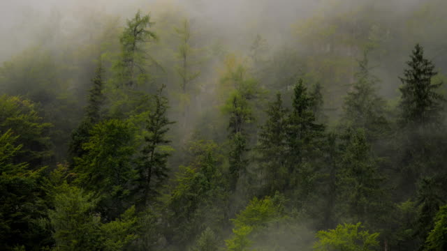 Misty Mountain Forest 09