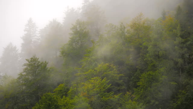 Misty Mountain Forest 10