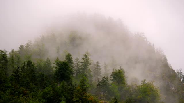 Misty Mountain Forest 11