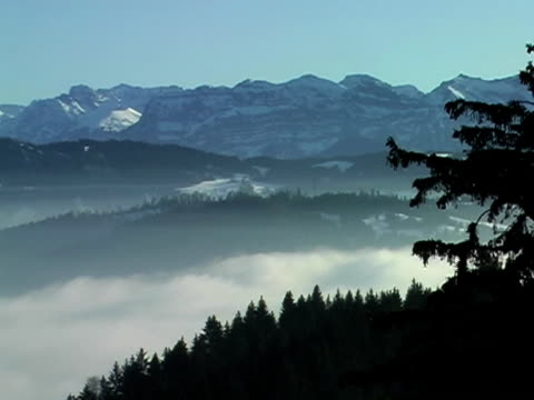 misty montagne  - pinacee video stock e b–roll