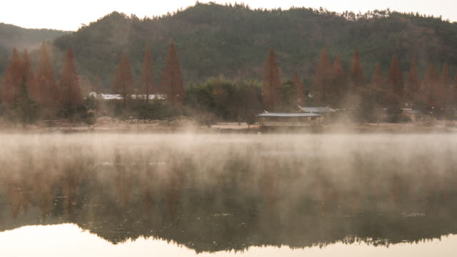 vídeos de stock e filmes b-roll de misty obongje reservoir / naju-si, jeollanam-do, south korea - árvore de folha caduca