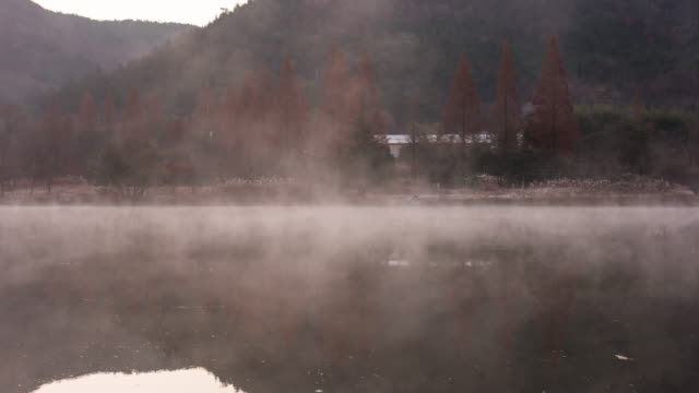 misty obongje reservoir / naju-si, jeollanam-do, south korea - sequoia stock videos & royalty-free footage