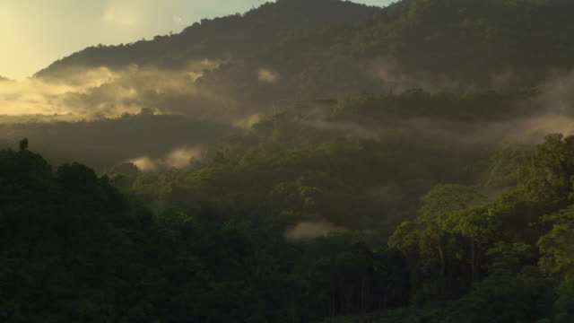 Misty rainforest and mountains, Guadalcanal, Solomon Islands