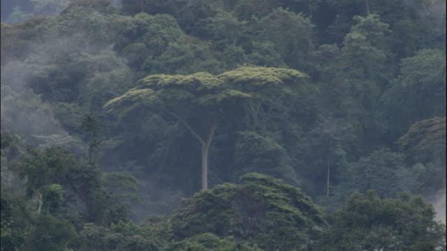 MS, Misty rainforest, Bwindi Impenetrable National Park, Uganda