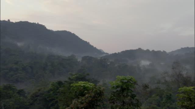 WS, HA, PAN, Misty rainforest, Bwindi Impenetrable National Park, Uganda