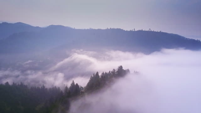 Misty Redwood Forest - Aerial Shot