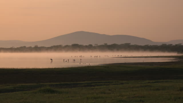 Misty sunrise over an african lake with a flock of flamingos