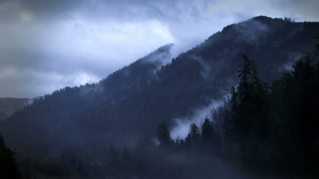 misty time lapse clouds blanket a pine tree forest and mountain. - kiefernholz stock-videos und b-roll-filmmaterial