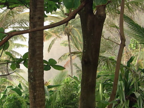 Misty tropical jungle.