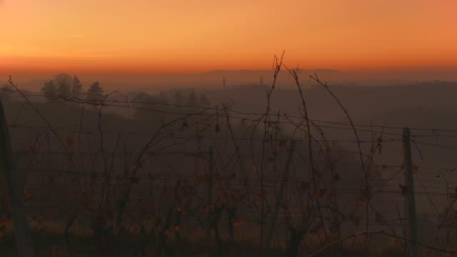 HD DOLLY: Misty Vineyards At Sunset