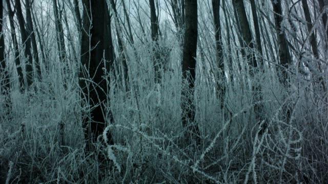misty winter woods ,dolly shot - bare tree stock videos & royalty-free footage