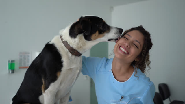 vídeos de stock e filmes b-roll de mixed breed dog licking veterinarian's cheek during consult while she - lamber