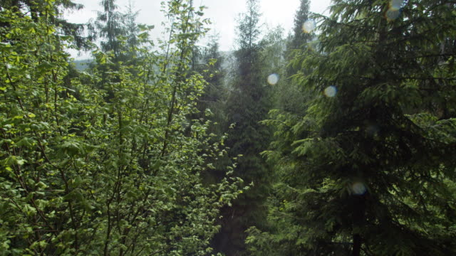 mixed forest in spring rain - evergreen tree stock videos & royalty-free footage