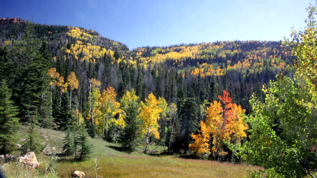 vídeos de stock e filmes b-roll de mixed forest - pine