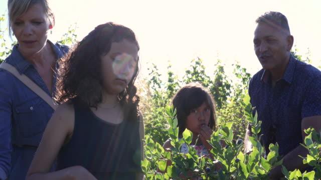 stockvideo's en b-roll-footage met gemengd ras familie plukken bosbessen, op biologische boerderij - mixed race person