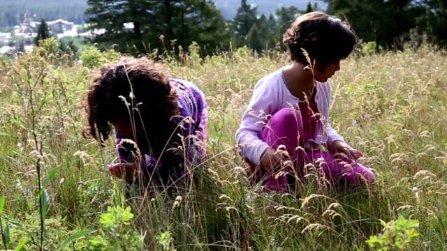 mixed race girls explore in mountain meadow - wildflower stock videos & royalty-free footage