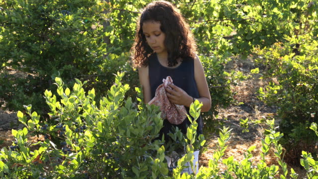 mixed race girls pick blueberries, at organic farm - blueberry stock videos & royalty-free footage