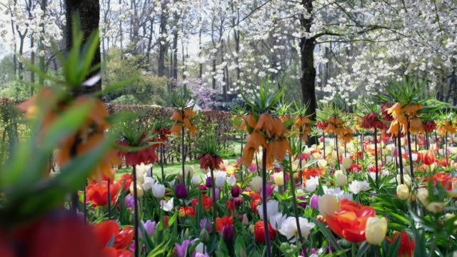 mixed spring border - netherlands stock videos & royalty-free footage