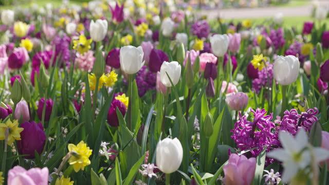 mixed spring garden - springtime stock videos & royalty-free footage
